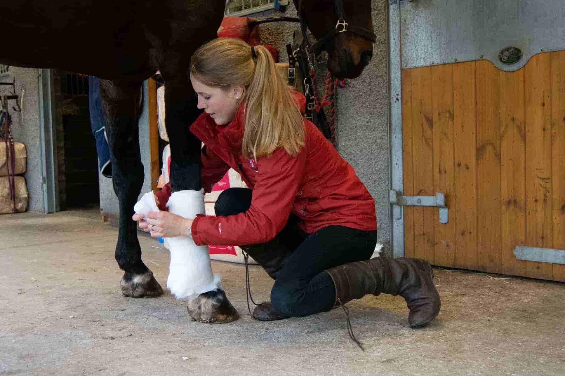 Veterinary Services in perth